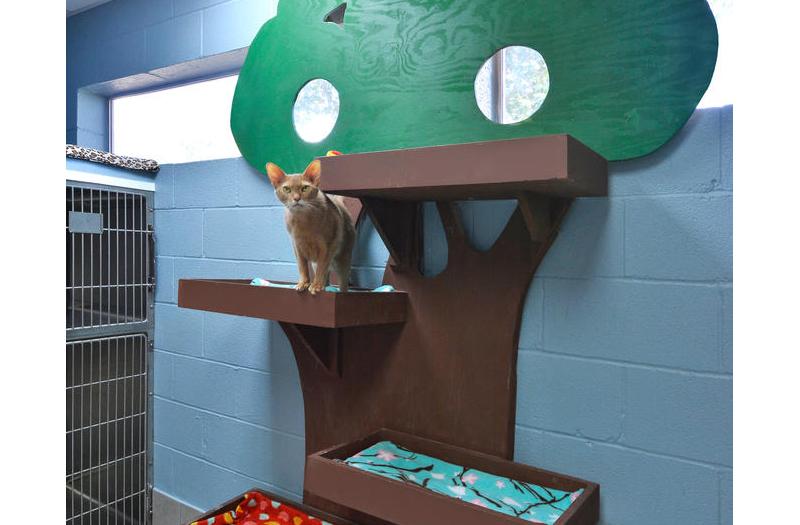 Spicewood Springs Animal Hospital Cat Boarding