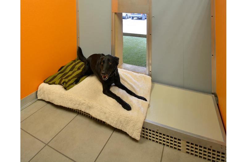 Spicewood Springs Animal Hospital Dog Boarding