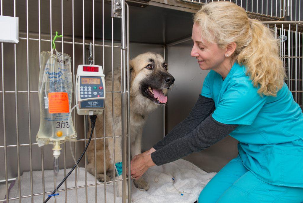 Hospital Austin Animal Center For Hospitalization