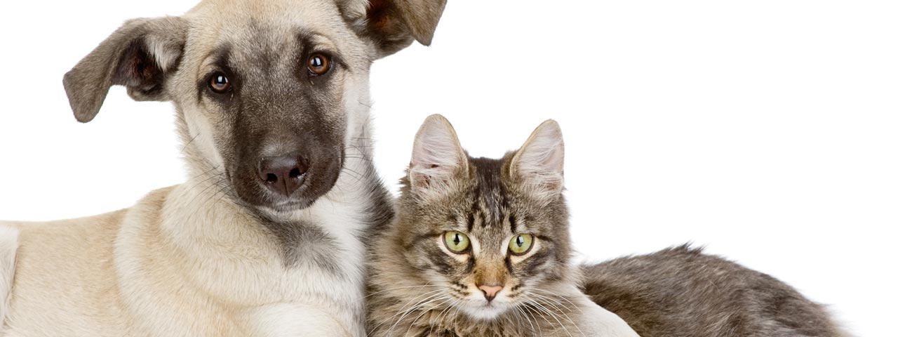 Northwest Austin full service veterinary care • 512 345 2727