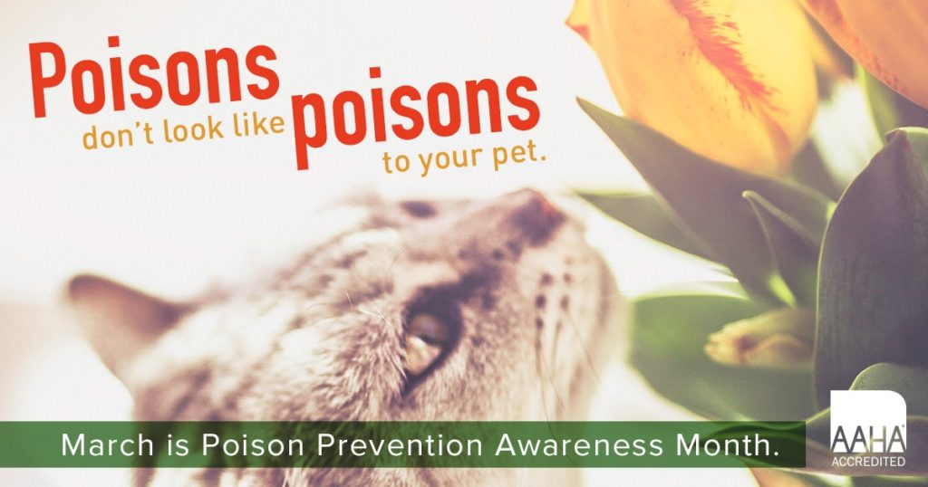 Pet Poison Prevention | Spicewood Animal Hospital